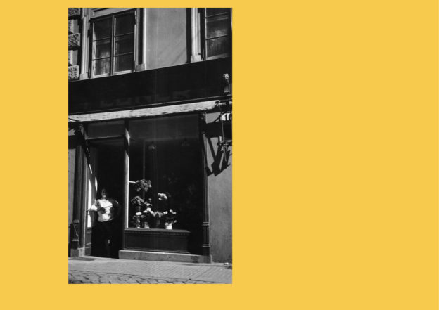 flowers are document_foto_splash page_GIALLO